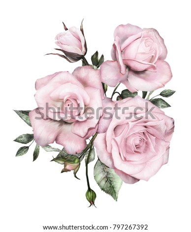 watercolor flowers. floral illustration, Leaf and buds. Botanic composition for wedding or  greeting card.  branch of flowers - roses, isolated on white background