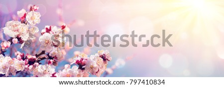 Pink Blossoms Against Sky At Sunrise - Spring Blooming - Contain Illustration  #797410834