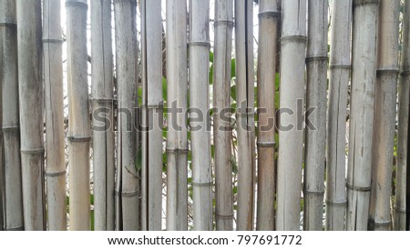 A bamboo backgrounds  #797691772