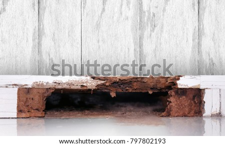 termite nest at wooden wall, nest termite at wood decay, background of nest termite, white ant, background damaged white wooden eaten by termite or white ant