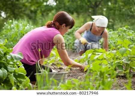 Two women working in her vegetable garden #80217946