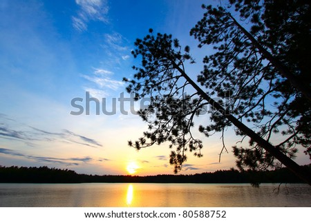 Beautiful sunset seen through pine trees over a northwoods Wisconsin lake #80588752