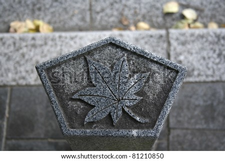 leaf picture on rock