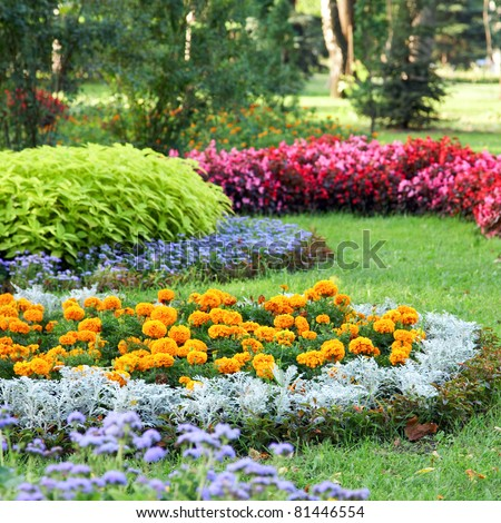 Blossoming colorful flowerbeds in summer city park. Beautiful natural landscape gardening concept. #81446554