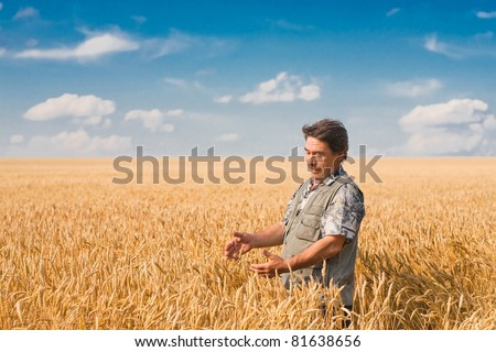farmer standing in a wheat field, looking at the crop #81638656
