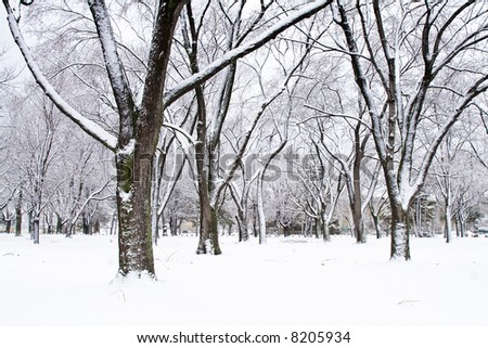Winter scene trees covered with snow #8205934