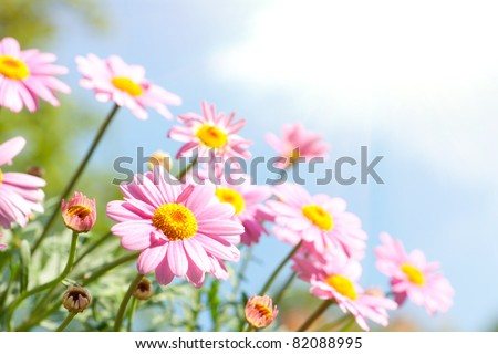 Pink daisy in front of blue sky with flowers #82088995