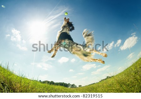 Dog catching a ball in mid-air Royalty-Free Stock Photo #82319515