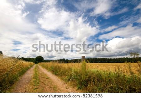 bridleway through an english hay field #82361596