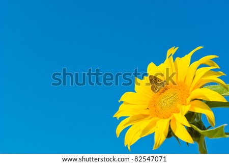 flowers on colorful background, flowers series, macro photo #82547071