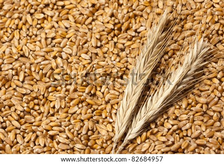 Close-up view of wheat ears with seeds #82684957