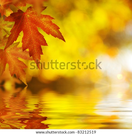 Fall.Autumn Background