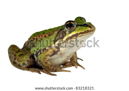 green frog on a white background #83218321