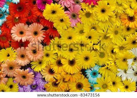 Flower background #83473156