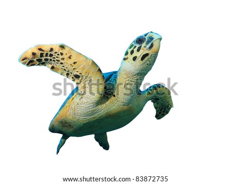 Hawksbill Sea Turtle isolated on white background #83872735
