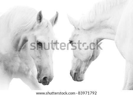 white horses #83971792