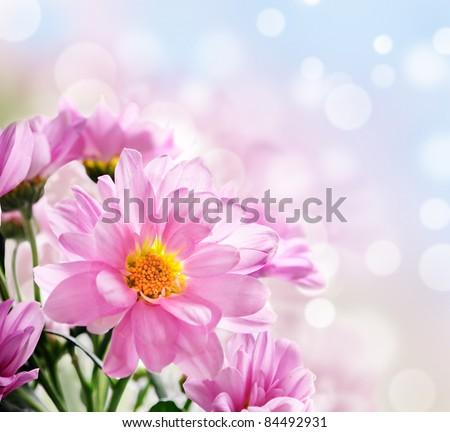 beautiful pink flowers in the garden #84492931