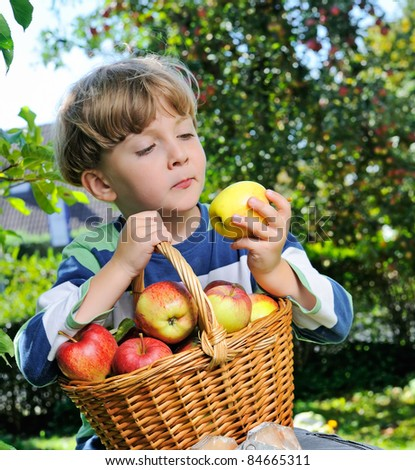 harvesting apples - boy helping in the garden with an apple in the hand and full basket #84665311
