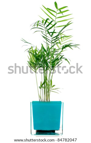 Houseplant in glass pot isolated on white background. #84782047