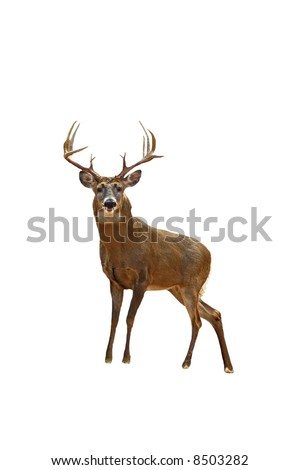 A isolated picture of a twelve point buck deer taken in a forest in Indiana