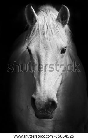 White horse's black and white art portrait. #85054525
