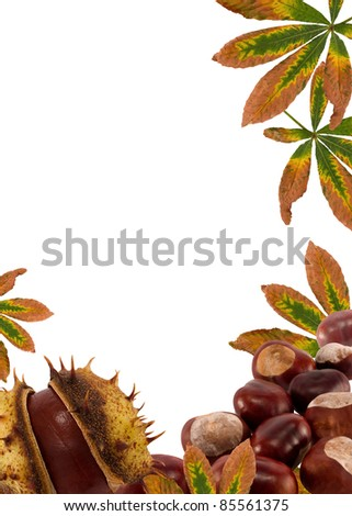 chestnuts and leaves.Autumn nature frame background for text on white #85561375