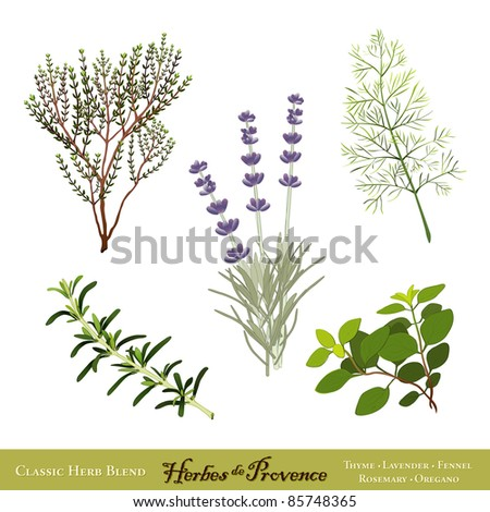 Herbes de Provence. Traditional French cooking herb blend from the south of France: Thyme, Sweet Lavender, Sweet Fennel, Rosemary, Oregano. See other herbs and spices in this series.