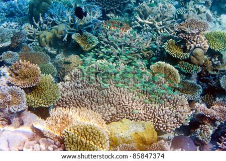 Indian ocean. Underwater world. Fishes in corals. #85847374