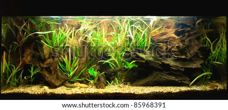 Natural aquarium representing tropical biotope