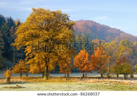 Beautiful autumn landscape with coloured trees