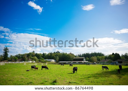 cows in a farm #86764498