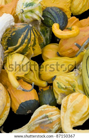 full frame background with lots of various curcurbits #87150367