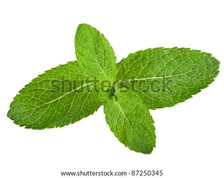 Fresh mint leaves isolated on white background. Studio macro #87250345