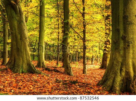 Autumn Fall forest with vivid colors and detail #87532546
