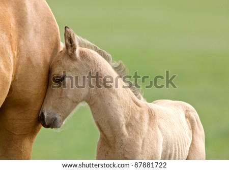 Horse and colt Saskatchewan Canada #87881722