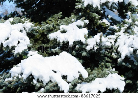 Background from a fur-tree covered with snow #88617025