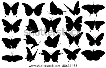 butterfly collage isolated on white
