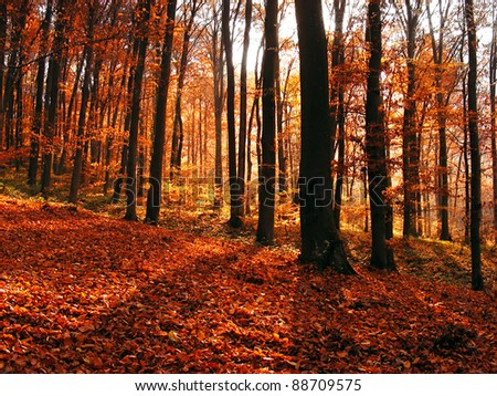 Forest in autumn. Beautiful nature background. #88709575