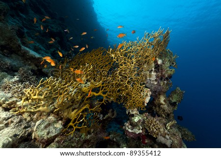 Tropical reef in the Red Sea. #89355412