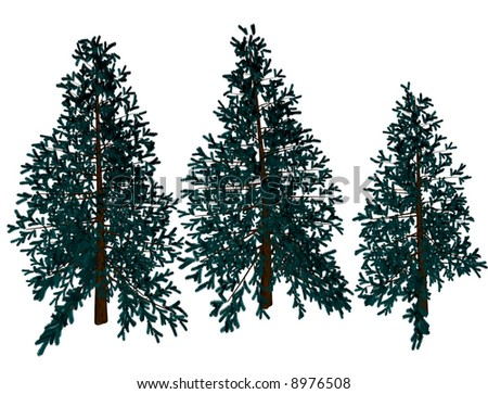 Christmas pine trees waiting to be chopped down #8976508