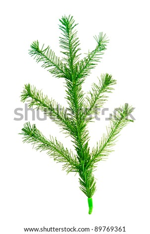christmas tree twig isolated on a white background #89769361