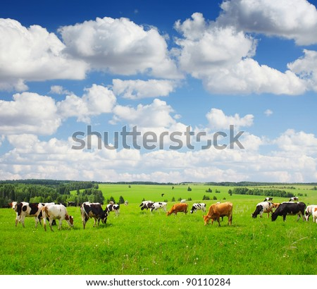 Cows grazing on a green summer meadow #90110284