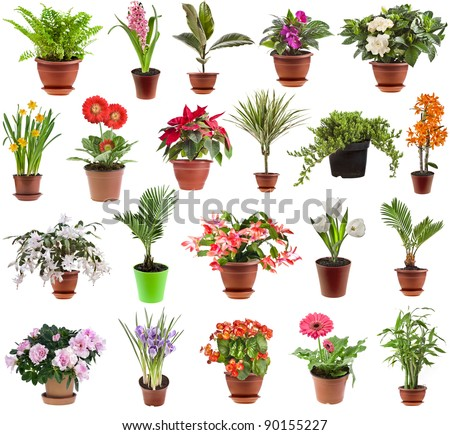 collection set of  houseplants in flower pot, isolated on white background #90155227