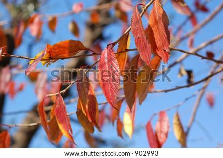 orange leaves #902993