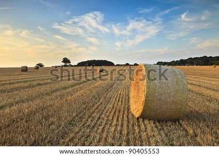 Bales in a field in Norfolk on a summers evening #90405553