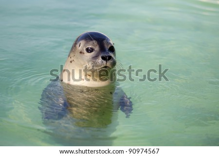 Swimming seals in clean green water