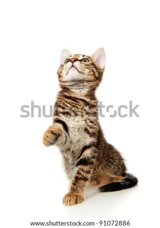 Funny kitten #91072886