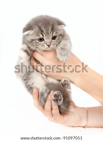 Kitten in the arms isolated on white #91097051