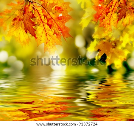 colorful autumn leaves reflecting in the water #91372724