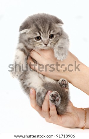 Kitten in the arms isolated on white #91718906